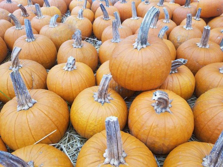 Hello, Pumpkin…