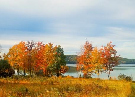 Fall2019Foliage2