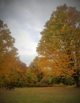 Fall2019Foliage3