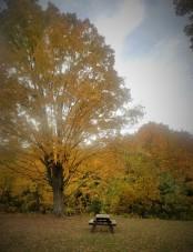 Fall2019Foliage4