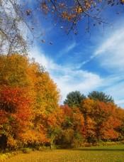 Fall2019Foliage5