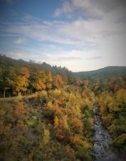 Fall2019Foliage6