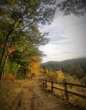 Fall2019Foliage7